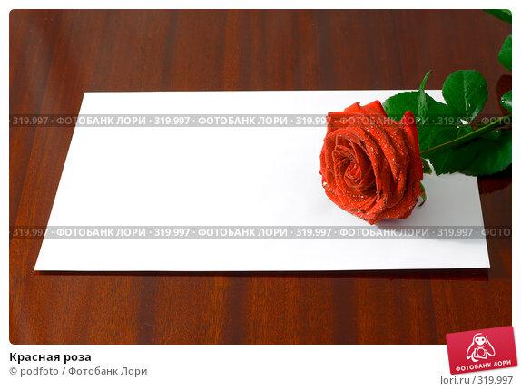 Купить «Красная роза», фото № 319997, снято 31 августа 2007 г. (c) podfoto / Фотобанк Лори