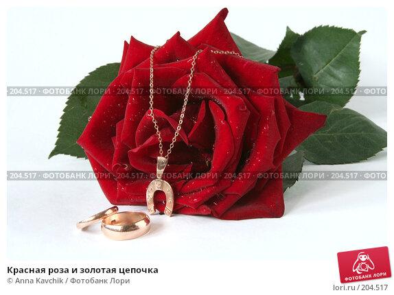 Красная роза и золотая цепочка, фото № 204517, снято 23 декабря 2007 г. (c) Anna Kavchik / Фотобанк Лори