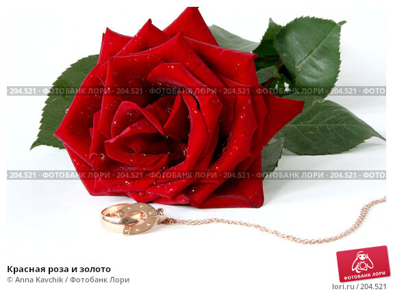 Красная роза и золото, фото № 204521, снято 23 декабря 2007 г. (c) Anna Kavchik / Фотобанк Лори