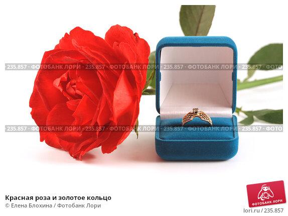 Красная роза и золотое кольцо, фото № 235857, снято 28 сентября 2007 г. (c) Елена Блохина / Фотобанк Лори