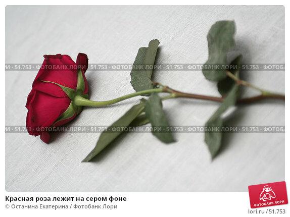 Красная роза лежит на сером фоне, фото № 51753, снято 31 января 2007 г. (c) Останина Екатерина / Фотобанк Лори