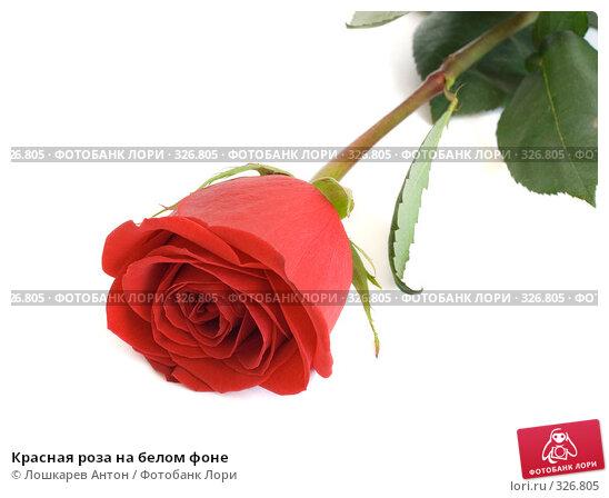 Красная роза на белом фоне, фото № 326805, снято 20 января 2017 г. (c) Лошкарев Антон / Фотобанк Лори