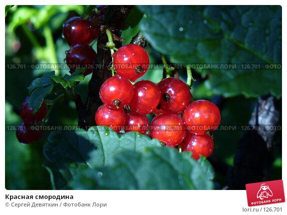 Красная смородина, фото № 126701, снято 8 июля 2007 г. (c) Сергей Девяткин / Фотобанк Лори