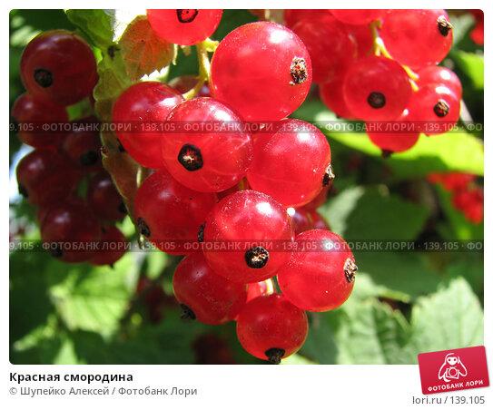 Красная смородина, фото № 139105, снято 10 августа 2006 г. (c) Шупейко Алексей / Фотобанк Лори