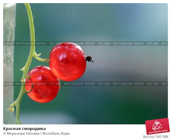 Красная смородина, фото № 161549, снято 23 июля 2005 г. (c) Морозова Татьяна / Фотобанк Лори