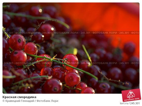 Красная смородина, фото № 245301, снято 18 июля 2004 г. (c) Кравецкий Геннадий / Фотобанк Лори