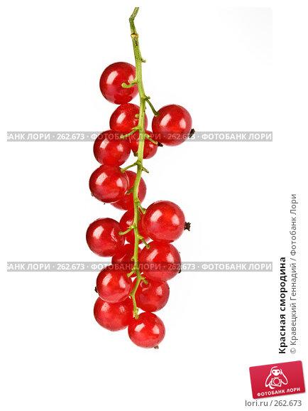 Купить «Красная смородина», фото № 262673, снято 17 июля 2005 г. (c) Кравецкий Геннадий / Фотобанк Лори