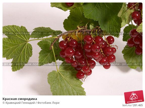 Красная смородина, фото № 281465, снято 21 июля 2004 г. (c) Кравецкий Геннадий / Фотобанк Лори