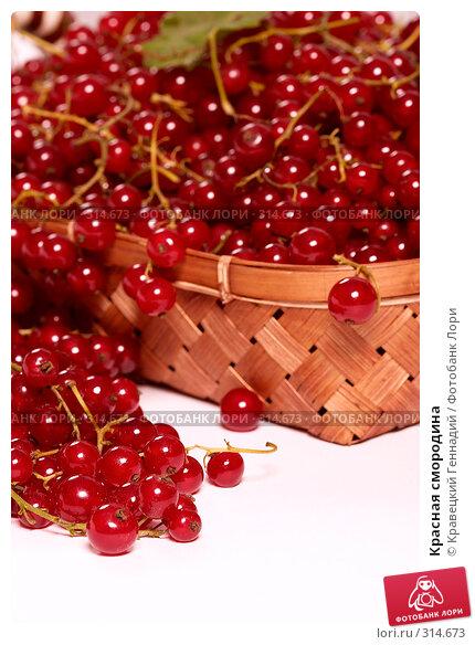 Красная смородина, фото № 314673, снято 22 июля 2004 г. (c) Кравецкий Геннадий / Фотобанк Лори