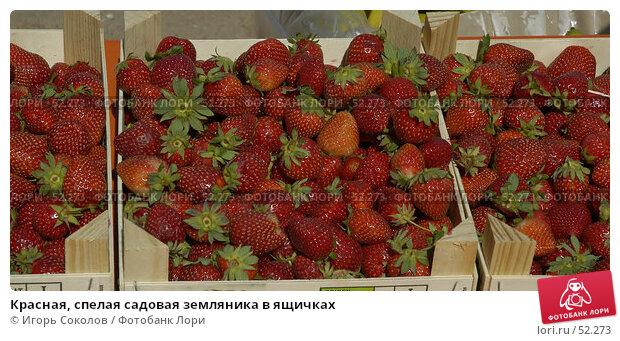 Красная, спелая садовая земляника в ящичках, фото № 52273, снято 27 мая 2017 г. (c) Игорь Соколов / Фотобанк Лори