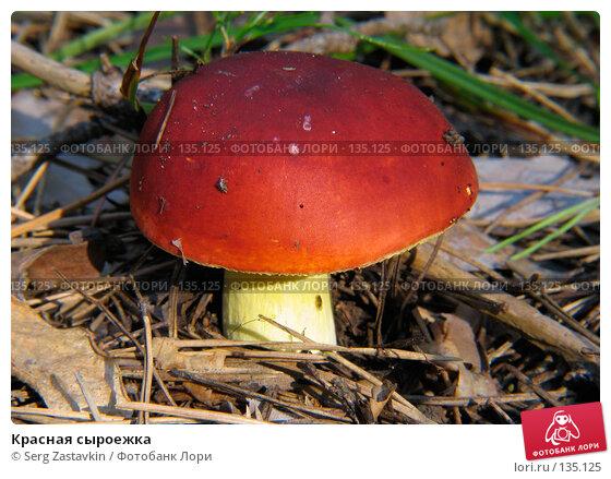 Купить «Красная сыроежка», фото № 135125, снято 18 августа 2005 г. (c) Serg Zastavkin / Фотобанк Лори