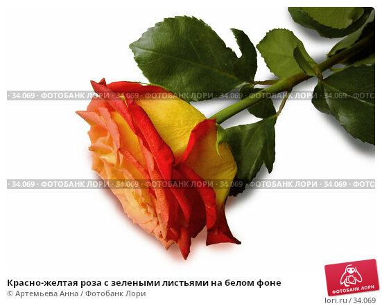 Красно-желтая роза с зелеными листьями на белом фоне, фото № 34069, снято 8 января 2006 г. (c) Артемьева Анна / Фотобанк Лори