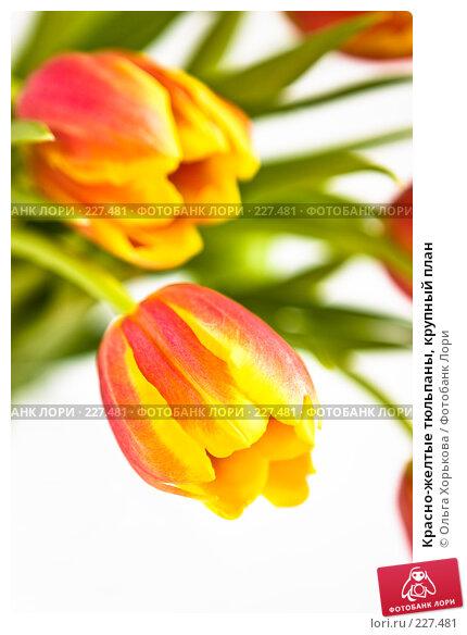 Красно-желтые тюльпаны, крупный план, фото № 227481, снято 8 марта 2008 г. (c) Ольга Хорькова / Фотобанк Лори