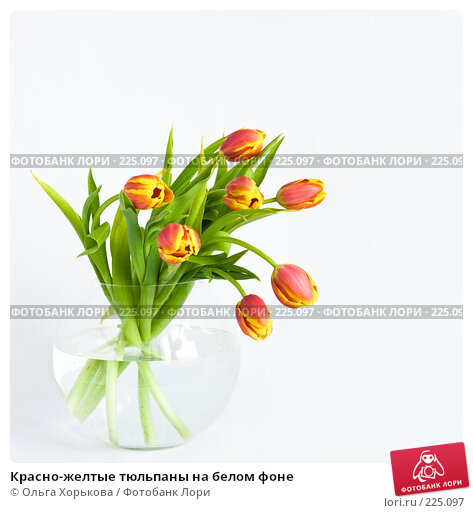 Купить «Красно-желтые тюльпаны на белом фоне», фото № 225097, снято 20 марта 2018 г. (c) Ольга Хорькова / Фотобанк Лори