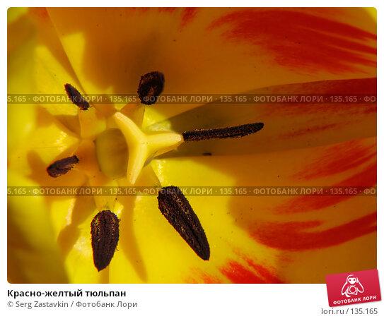 Красно-желтый тюльпан, фото № 135165, снято 20 мая 2005 г. (c) Serg Zastavkin / Фотобанк Лори