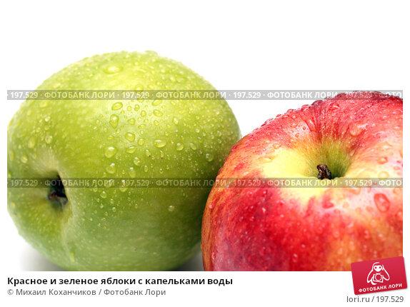 Купить «Красное и зеленое яблоки с капельками воды», фото № 197529, снято 6 февраля 2008 г. (c) Михаил Коханчиков / Фотобанк Лори