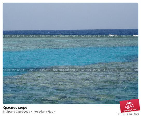 Красное море, фото № 249873, снято 10 ноября 2006 г. (c) Ирина Стюфеева / Фотобанк Лори