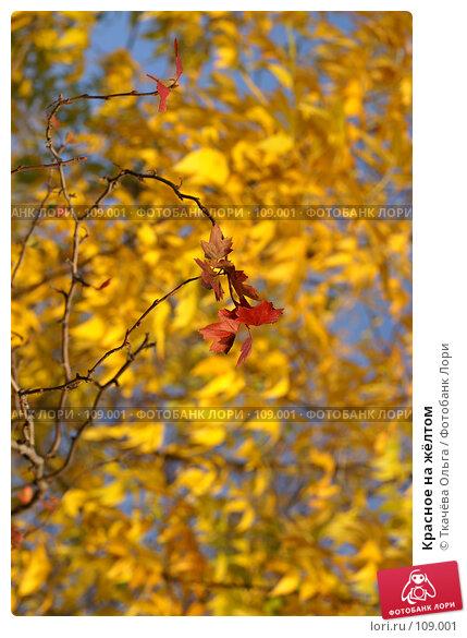 Красное на жёлтом, фото № 109001, снято 29 сентября 2007 г. (c) Ткачёва Ольга / Фотобанк Лори