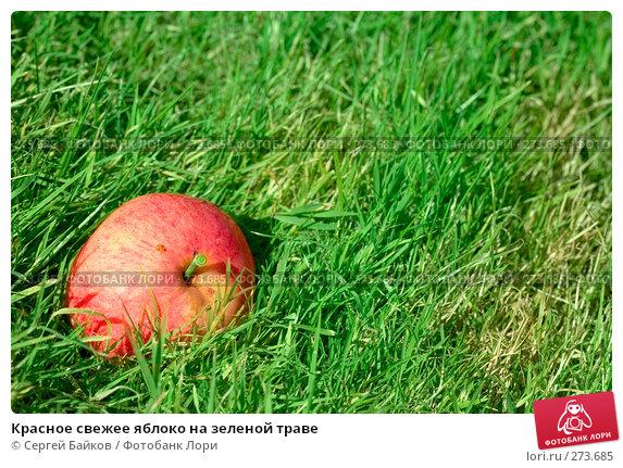 Красное свежее яблоко на зеленой траве, фото № 273685, снято 22 сентября 2007 г. (c) Сергей Байков / Фотобанк Лори
