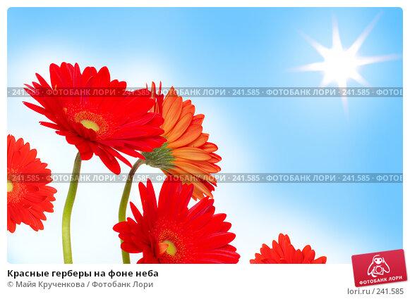 Красные герберы на фоне неба, фото № 241585, снято 17 февраля 2008 г. (c) Майя Крученкова / Фотобанк Лори