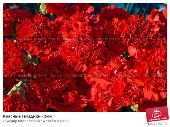 Купить «Красные гвоздики - фон», фото № 280117, снято 9 мая 2008 г. (c) Федор Королевский / Фотобанк Лори
