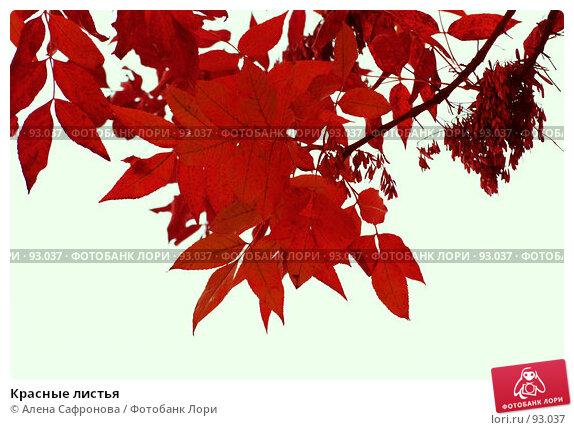 Красные листья, фото № 93037, снято 26 сентября 2007 г. (c) Алена Сафронова / Фотобанк Лори
