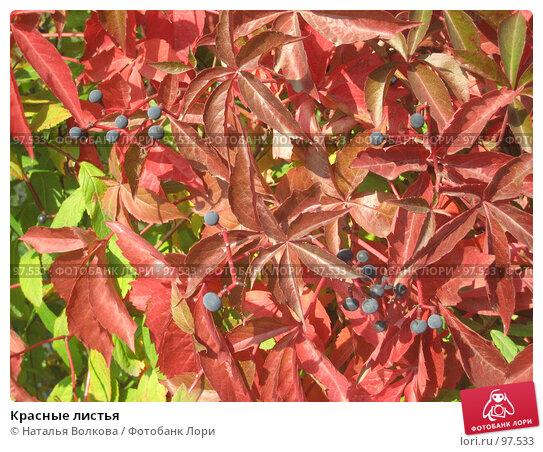 Купить «Красные листья», эксклюзивное фото № 97533, снято 28 сентября 2007 г. (c) Наталья Волкова / Фотобанк Лори