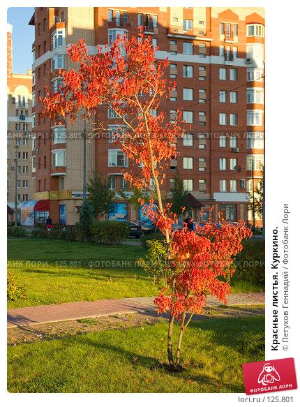 Купить «Красные листья. Куркино.», фото № 125801, снято 21 сентября 2007 г. (c) Петухов Геннадий / Фотобанк Лори