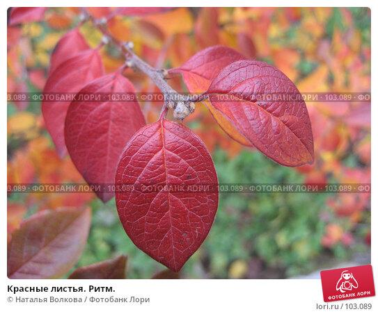 Красные листья. Ритм., эксклюзивное фото № 103089, снято 22 августа 2016 г. (c) Наталья Волкова / Фотобанк Лори