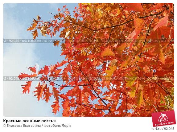 Красные осенние листья, фото № 92045, снято 29 сентября 2007 г. (c) Елисеева Екатерина / Фотобанк Лори