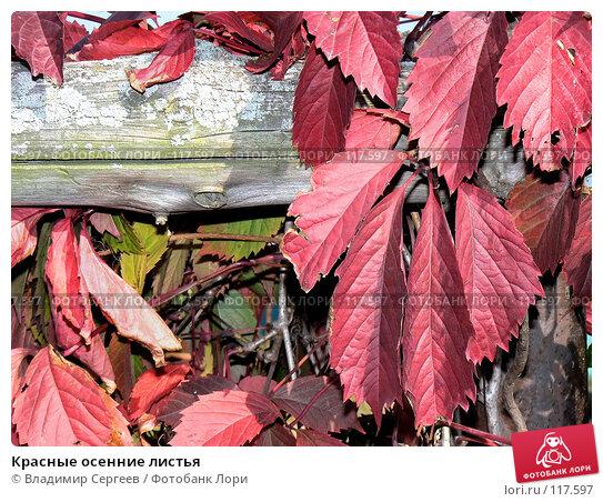 Красные осенние листья, фото № 117597, снято 19 января 2017 г. (c) Владимир Сергеев / Фотобанк Лори