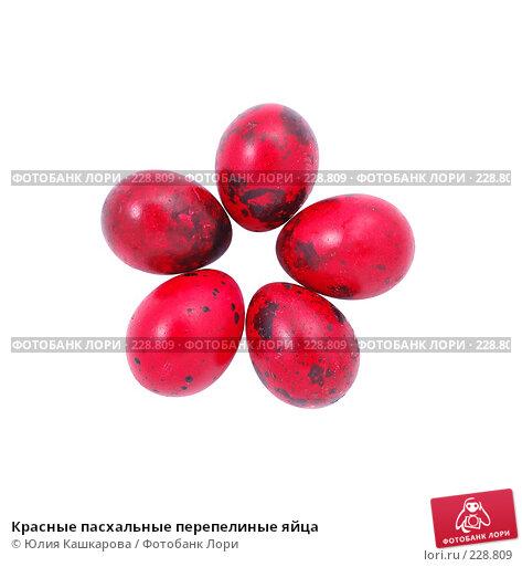Красные пасхальные перепелиные яйца, фото № 228809, снято 15 марта 2008 г. (c) Юлия Кашкарова / Фотобанк Лори