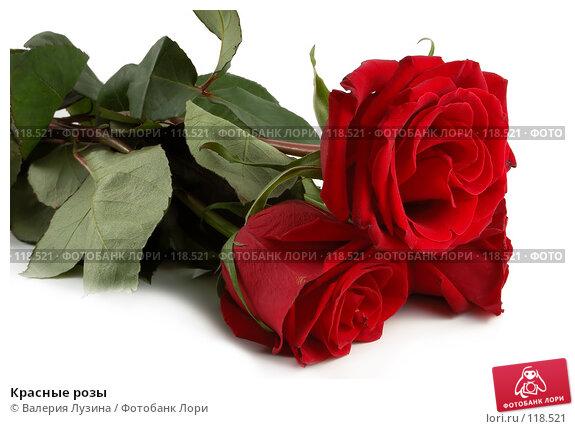Красные розы, фото № 118521, снято 16 ноября 2007 г. (c) Валерия Потапова / Фотобанк Лори
