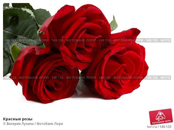 Красные розы, фото № 149133, снято 16 ноября 2007 г. (c) Валерия Потапова / Фотобанк Лори
