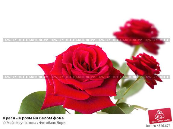 Красные розы на белом фоне, фото № 326677, снято 21 мая 2008 г. (c) Майя Крученкова / Фотобанк Лори