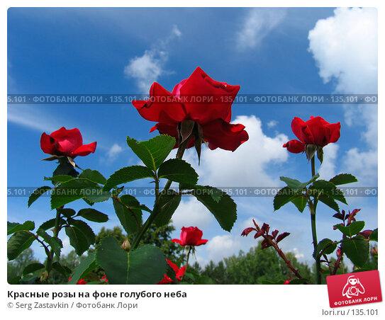 Купить «Красные розы на фоне голубого неба», фото № 135101, снято 28 июня 2005 г. (c) Serg Zastavkin / Фотобанк Лори