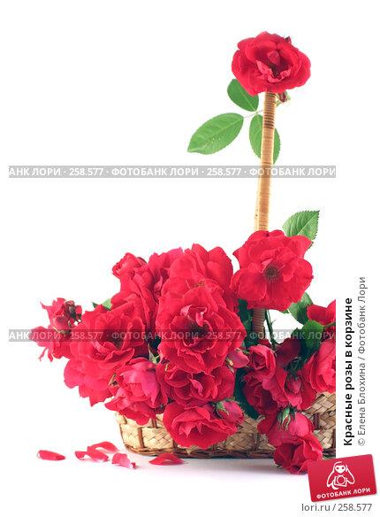 Красные розы в корзине, фото № 258577, снято 28 июня 2007 г. (c) Елена Блохина / Фотобанк Лори