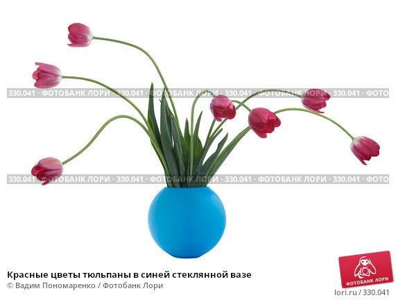 Купить «Красные цветы тюльпаны в синей стеклянной вазе», фото № 330041, снято 27 мая 2008 г. (c) Вадим Пономаренко / Фотобанк Лори