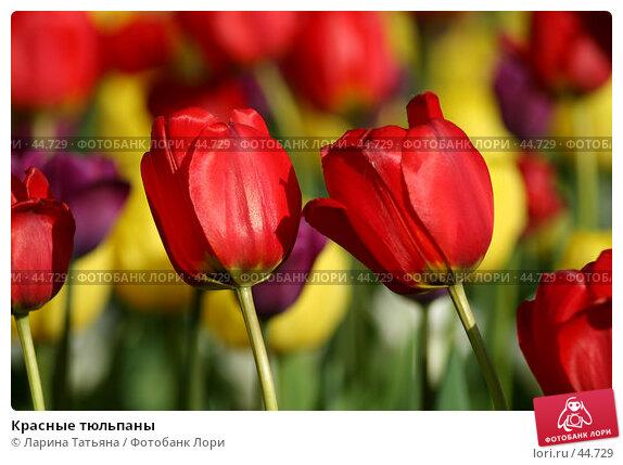 Красные тюльпаны, фото № 44729, снято 16 мая 2007 г. (c) Ларина Татьяна / Фотобанк Лори