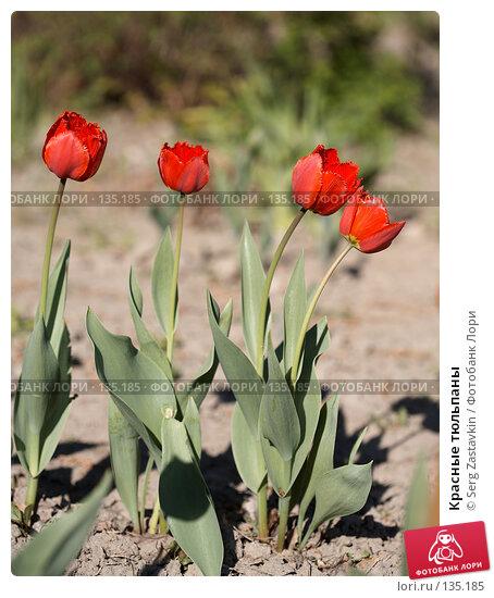 Красные тюльпаны, фото № 135185, снято 31 мая 2006 г. (c) Serg Zastavkin / Фотобанк Лори