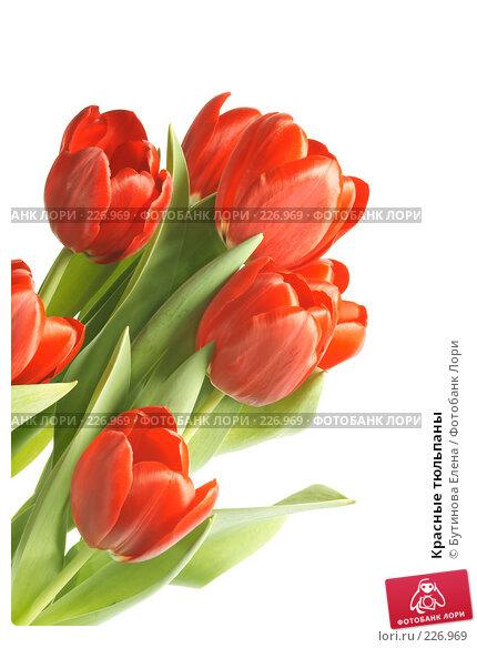Красные тюльпаны, фото № 226969, снято 19 марта 2008 г. (c) Бутинова Елена / Фотобанк Лори