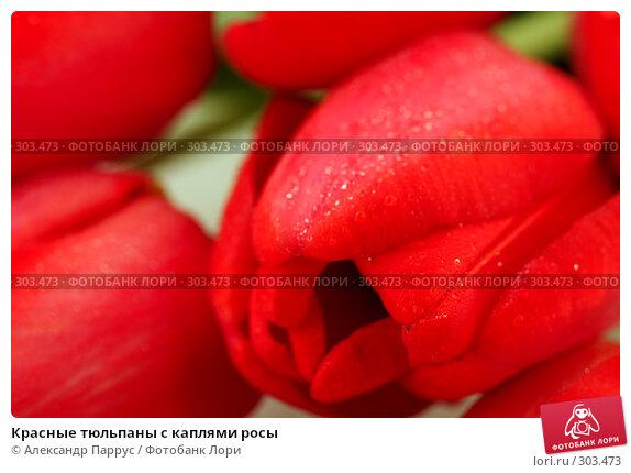 Красные тюльпаны с каплями росы, фото № 303473, снято 21 апреля 2008 г. (c) Александр Паррус / Фотобанк Лори
