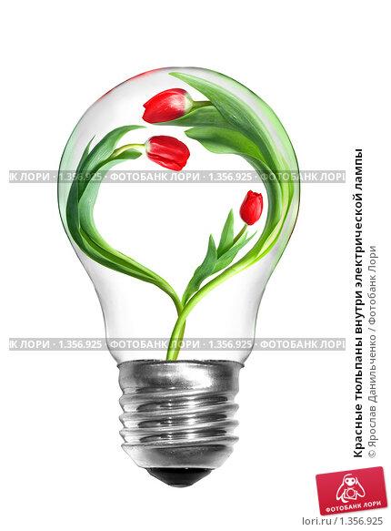 Купить «Красные тюльпаны внутри электрической лампы», фото № 1356925, снято 1 августа 2009 г. (c) Ярослав Данильченко / Фотобанк Лори
