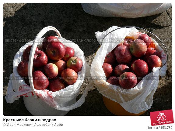 Красные яблоки в ведрах, фото № 153789, снято 1 октября 2007 г. (c) Иван Мацкевич / Фотобанк Лори