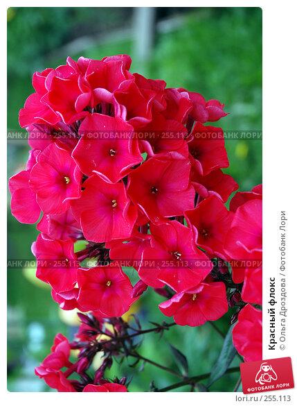 Красный флокс, фото № 255113, снято 15 июля 2006 г. (c) Ольга Дроздова / Фотобанк Лори