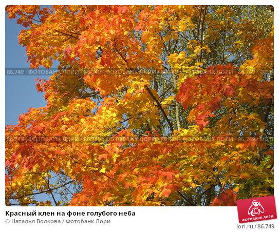 Красный клен на фоне голубого неба, фото № 86749, снято 22 сентября 2007 г. (c) Наталья Волкова / Фотобанк Лори