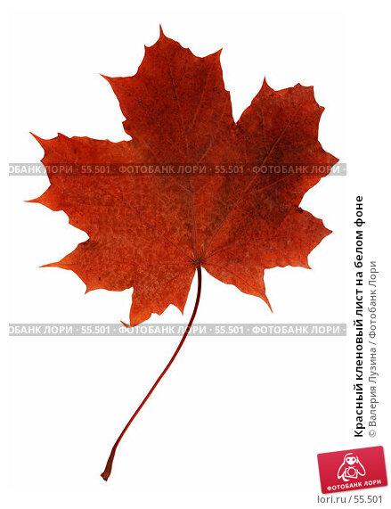 Красный кленовый лист на белом фоне, фото № 55501, снято 12 октября 2006 г. (c) Валерия Потапова / Фотобанк Лори