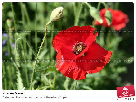 Красный мак, фото № 54745, снято 14 июня 2007 г. (c) Донцов Евгений Викторович / Фотобанк Лори