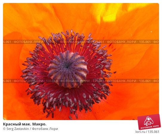 Красный мак. Макро., фото № 135061, снято 11 июня 2004 г. (c) Serg Zastavkin / Фотобанк Лори