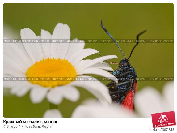 Красный мотылек, макро, фото № 307813, снято 1 июня 2008 г. (c) Игорь Р / Фотобанк Лори